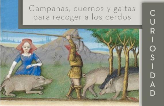 Campanas, cuernos y gaitas para recoger a los cerdos